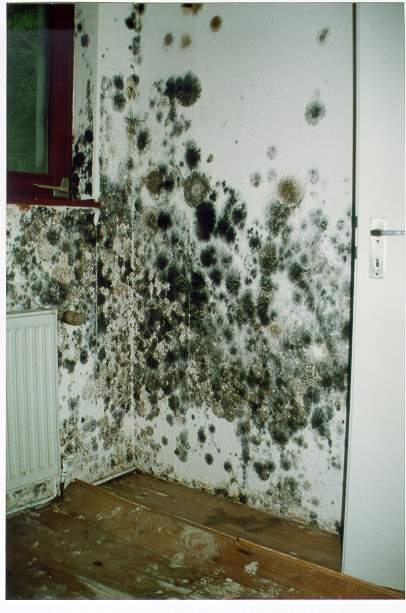 schimmel in huis gevolgen